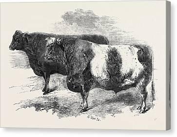 251 Canvas Print - Meeting Of The Royal Agricultural Society At Salisbury No by English School