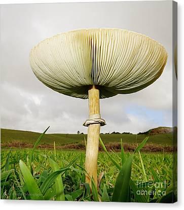 Mega Mushroom Iv Canvas Print