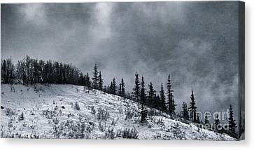 Melancholia Pines And Trees Canvas Print