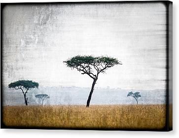 Mellow Mara Acacias Canvas Print by Mike Gaudaur