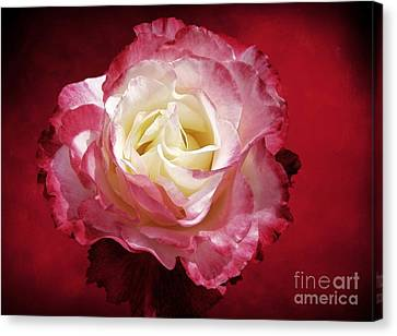 Mellow Passion Canvas Print by Ellen Cotton