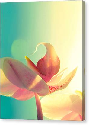 Orchids Canvas Print - Melody by Amy Tyler