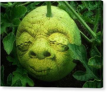 Melon Head Canvas Print by Jack Zulli