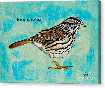 Melospiza Melodia Canvas Print by Stefanie Forck