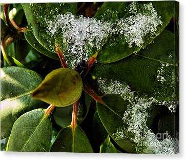 Canvas Print featuring the photograph Melting Crystals by Robyn King