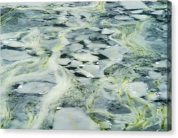 Melting Ice - Featured 2 Canvas Print by Alexander Senin