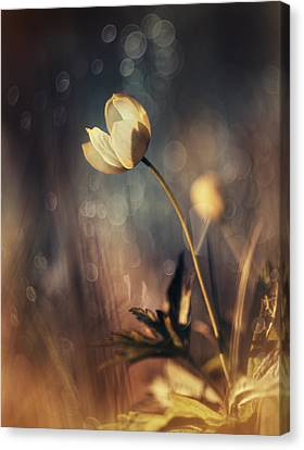 Memories Of Daylight Canvas Print by Magda  Bognar