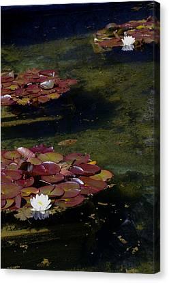 Memories Of Monet Canvas Print by Marilyn Wilson