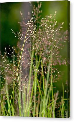 Memories Of Springtime Canvas Print by Holly Kempe