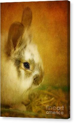 Memories Of Watership Down Canvas Print