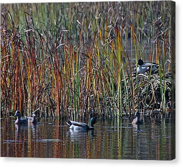 Menagerie Of Ducks Canvas Print by Rhonda Humphreys