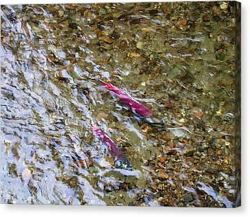 Mendenhall Salmon Canvas Print