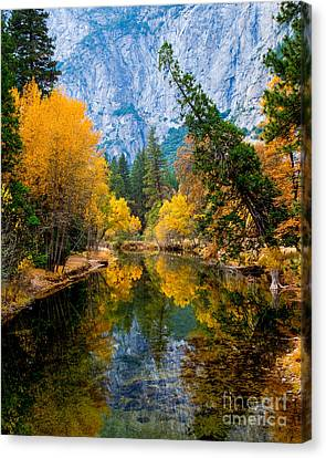Merced River And Leaning Pine Canvas Print