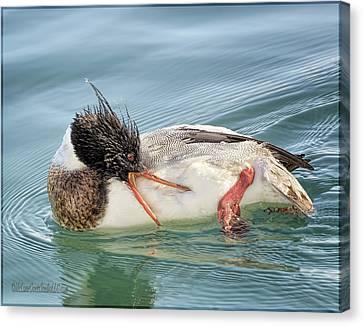 Merganser Duck Itch Canvas Print