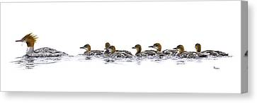 Merganser Family Canvas Print by Brent Ander