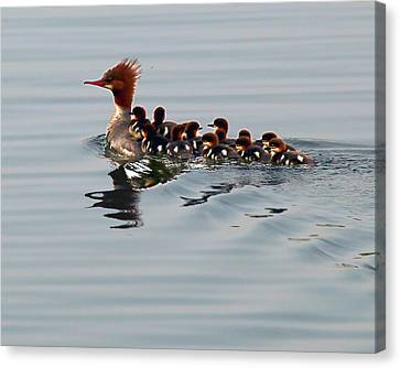 Punk Duck And Posse Canvas Print