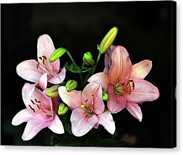 Merlot Lilies Canvas Print by Jp Grace