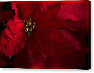 Merry And Bright Canvas Print by Cindy Rubin
