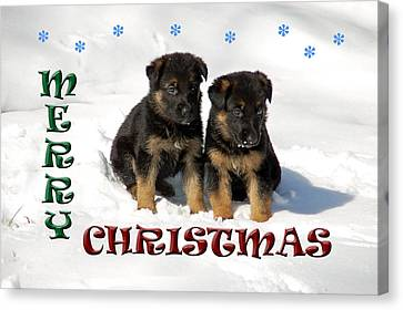 Merry Christmas Puppies Canvas Print by Aimee L Maher Photography and Art Visit ALMGallerydotcom