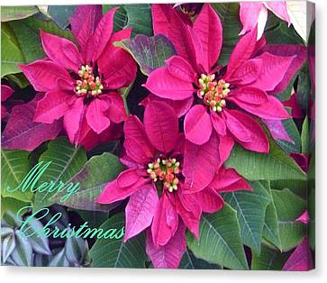Merry Christmas To You Canvas Print by Lingfai Leung