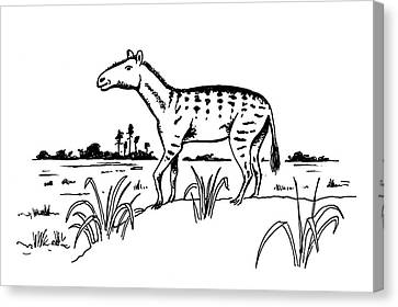 Mesohippus Prehistoric Horse Canvas Print by Richard Bizley