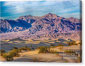 Mesquite Dunes And Mountains Canvas Print