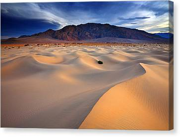 Mesquite Gold Canvas Print by Darren  White