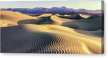 Grapevines Canvas Print - Mesquite Sand Dunes by Tom Norring