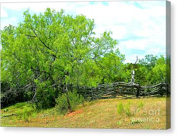 Mesquite Tree And Cedar Post Fence Canvas Print