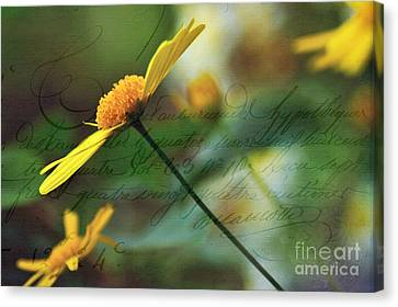 Message In A Daisy Canvas Print