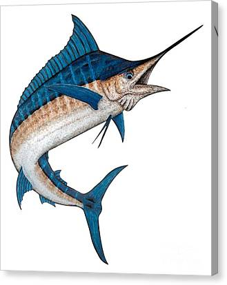 Metal Marlin Realistic Canvas Print by Carol Lynne