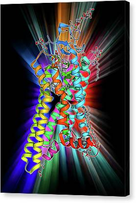 Metarhodopsin Molecule Canvas Print by Laguna Design