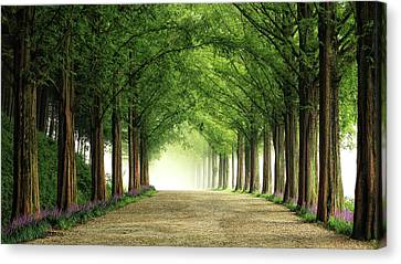 Ceiling Canvas Print - Metasequoia Road by Tiger Seo