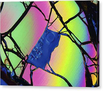 Meteorite Jepara, Thin Section, Lm Canvas Print