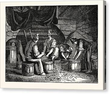 Method Of Curing Anchovies In Sicily Italy Canvas Print by Italian School