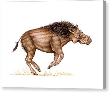 Metridiochoerus Prehistoric Pig Canvas Print
