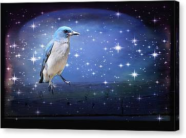 Mexican Blue Jay Canvas Print