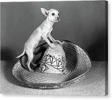Black Top Canvas Print - Mexican Chihuahua Standing On Top by Vintage Images