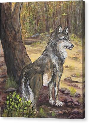 Mexican Gray Wolf Canvas Print by Caroline Owen-Doar