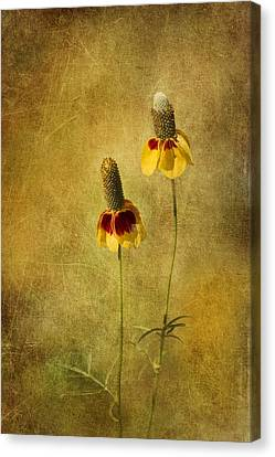 Cone Flower Canvas Print - Mexican Hat Dance by David and Carol Kelly