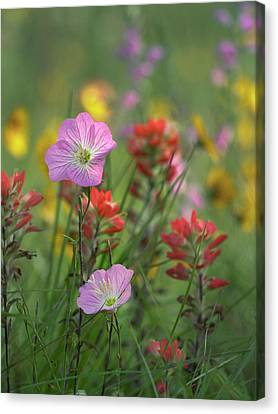 Close Focus Floral Canvas Print - Mexican Primrose And Paintbrushes by Tim Fitzharris