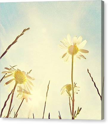 Instamood Canvas Print - #mgmarts #daisy #all_shots #dreamy by Marianna Mills