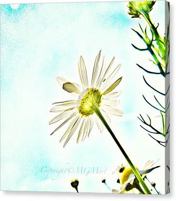 Instamood Canvas Print - #mgmarts #daisy #flower #morning by Marianna Mills