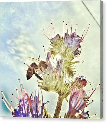 #mgmarts #flower #spring #summer #bee Canvas Print by Marianna Mills