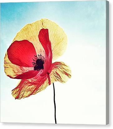 Instahub Canvas Print - #mgmarts #poppy #nature #red #hungary by Marianna Mills