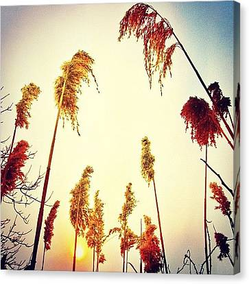 #mgmarts #sunset #bright #beautiful Canvas Print