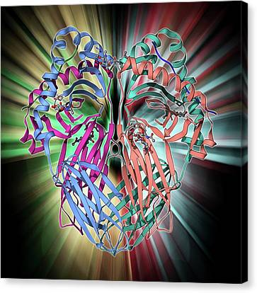 Mhc Protein Complexed With Flu Virus Canvas Print