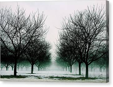 Michigan Cherry Trees In Winter Canvas Print by John McGraw