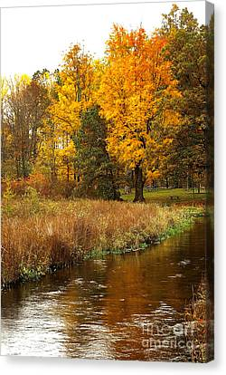 Color Me Trout Canvas Print - Michigan In The Fall by Gary Richards