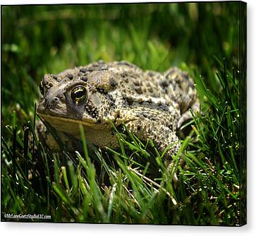 Michigan Toad In The Wild Canvas Print
